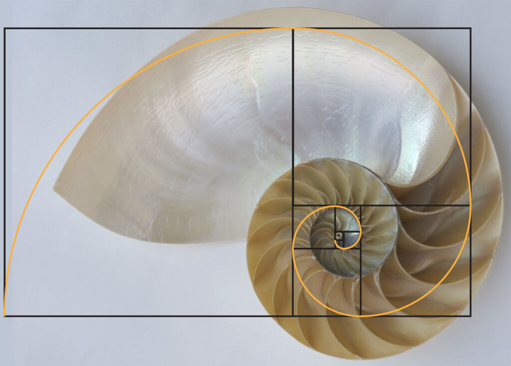 Fibonacci spiral and the nautilus shell