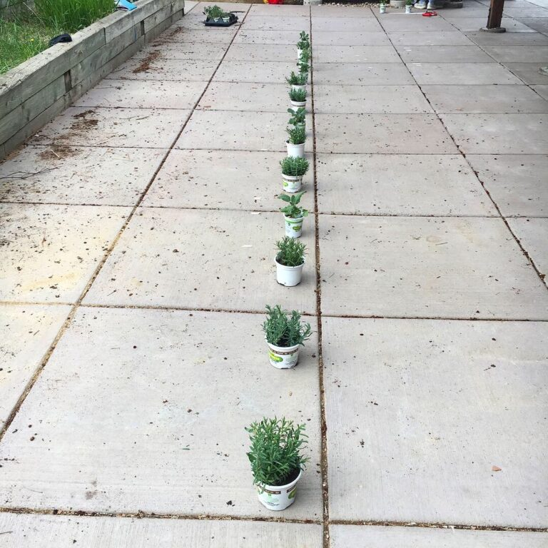 Rhythms, elements, and plants