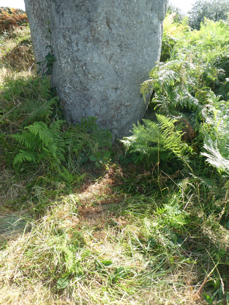 Deer like to sleep next to this menhir and they chose a crystalline healing vortex.