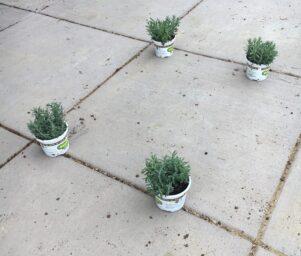 Solsticial Quadrilateral of plants